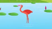 Appu Flamingo
