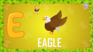 Baby Time Eagle