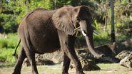 Disney-animals-african-elephants-01