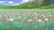 Greater-flamingo-jungle-emperor-leo