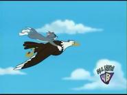Bald-eagle9