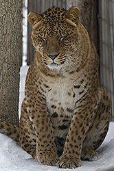 Jaglion