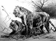 Illustration of two Caspian tigers