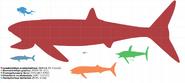 Pachycormidae size comparison