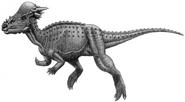 Art of subadult Pachycephalosaurus wyomingensis