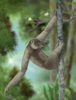 453px-Palaeopropithecus ingens