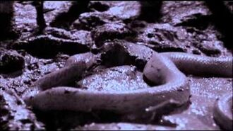 Life in Cold Blood 04 Sophisticated Serpents