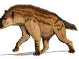 Percrocutidae