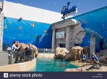 Seals-frolic-outside-atlantis-marine-world-aquarium-riverhead-north-C84NJC