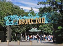 800px-Bronx Zoo 001