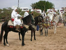 Berber warriors mounted on Barbs