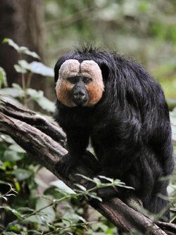 New-monkey-species-amazon-1-s1533x2048-p