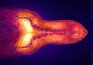 Graphic thermal image of T-rex's skull