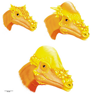 Pachycephalosaurus wyomingensis head growth stage