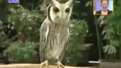 Transformer Owl