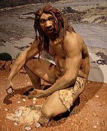 Homo heidelbergensis (10233446)