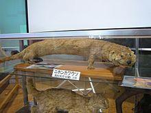 220px-Japanese otter