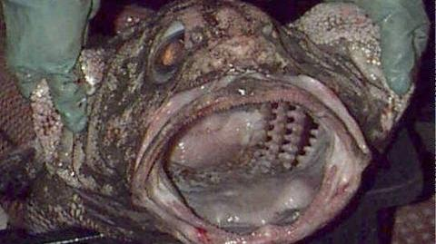 Scary Deep Sea Creature