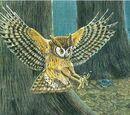 Rodrigues Owl