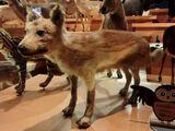 Honshū Wolf