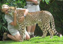 Australia Zoo cheetah and zookeepers