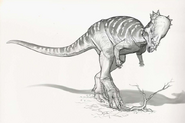 Sketch of Pachycephalosaurus digging out a root