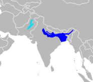 Range Indus and Ganges River Dolphin
