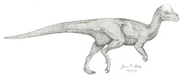 Sketch of Pachycephalosaurus wyomingensis