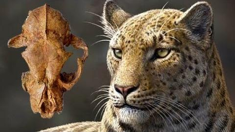 NEW SPECIES OLDEST BIG CAT DISCOVERED