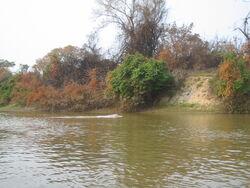 Bolivian River Dolphin