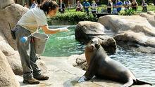 Axnvvmyry Julie Larsen Maher 1321 California Sea Lion Show with trainer SLP BZ 09 13 10 hr
