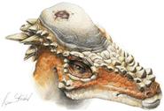 Art of Pachycephalosaurus with cranial lesion