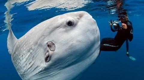 Giant Alien-Like Fish