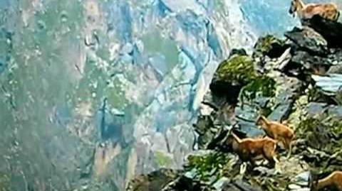 3 4 Planet Earth BBC ~ Mountains Episode
