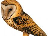 Golden Masked Owl