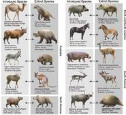 Introduced Species and Extinct Species