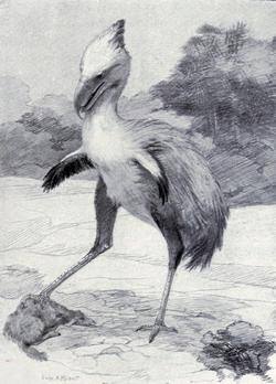 Life restoration of Phorusrhacos by Charles Knight
