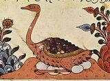 Arabian Ostrich