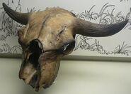 Bison antiquus skull