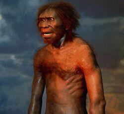 Homo-erectus