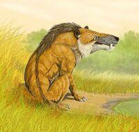 Restoration A. mongoliensis