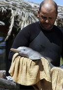 La Plata Dolphin rescued7