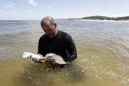 La Plata Dolphin rescued