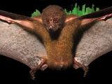 New Georgian Monkey-faced Bat