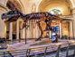 Chicago-tyrannosaurus-rex-sue-christopher-arndt