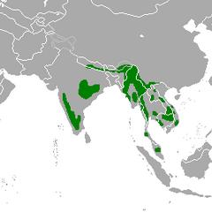 Present range of Gaur