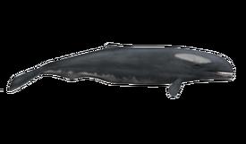 Ancient-whale