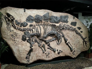 Fossilized in-ground Stegosaurus