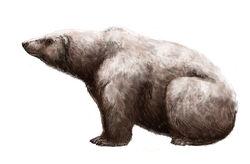 800px-Ursus maritimus tyrannus