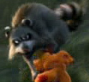 Barnyard Raccoon